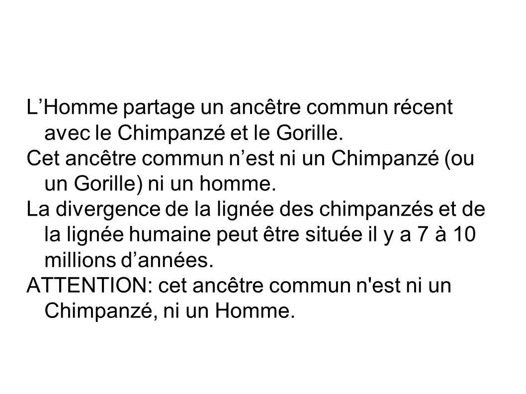 L'Homme partage un ancêtre commun récent avec le Chimpanzé et le Gorille.