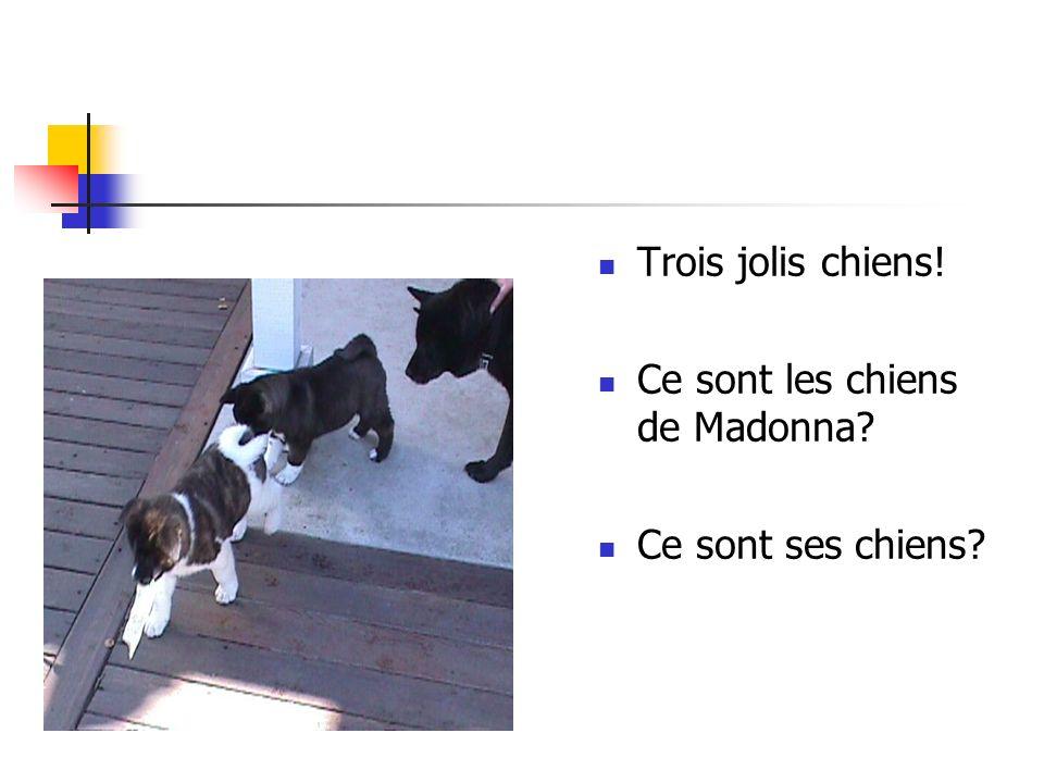 Trois jolis chiens! Ce sont les chiens de Madonna Ce sont ses chiens