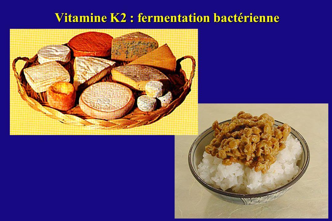 Vitamine K2 : fermentation bactérienne