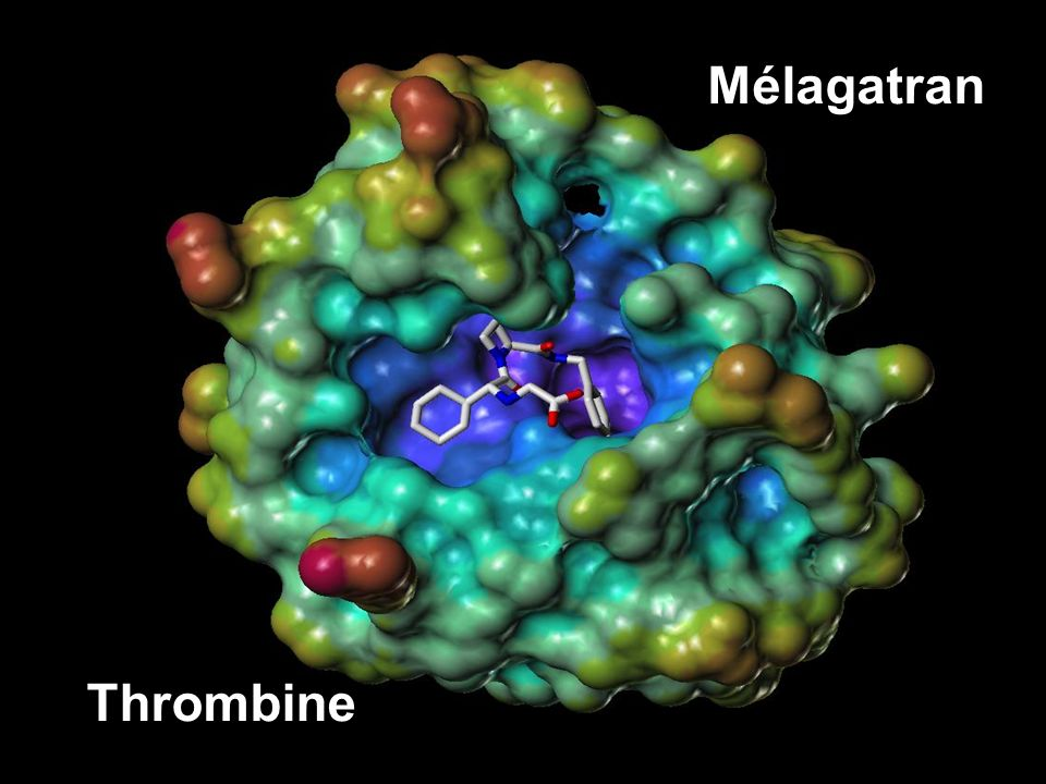 Mélagatran Thrombine