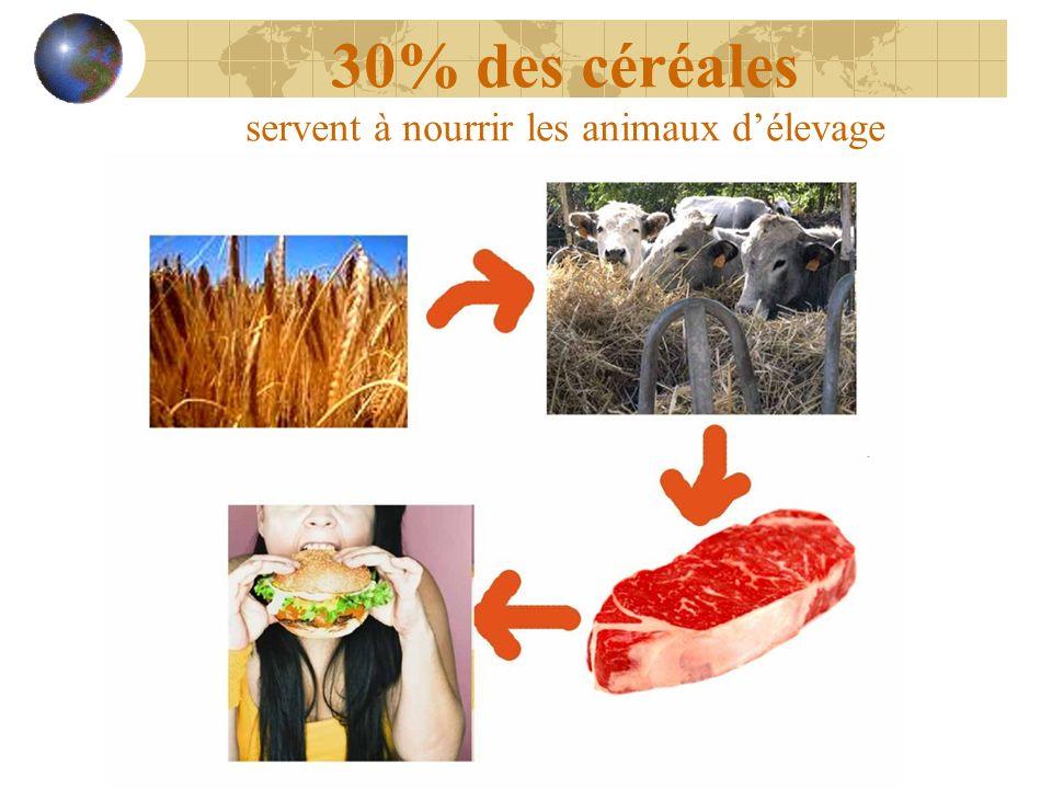 30% des céréales servent à nourrir les animaux d'élevage