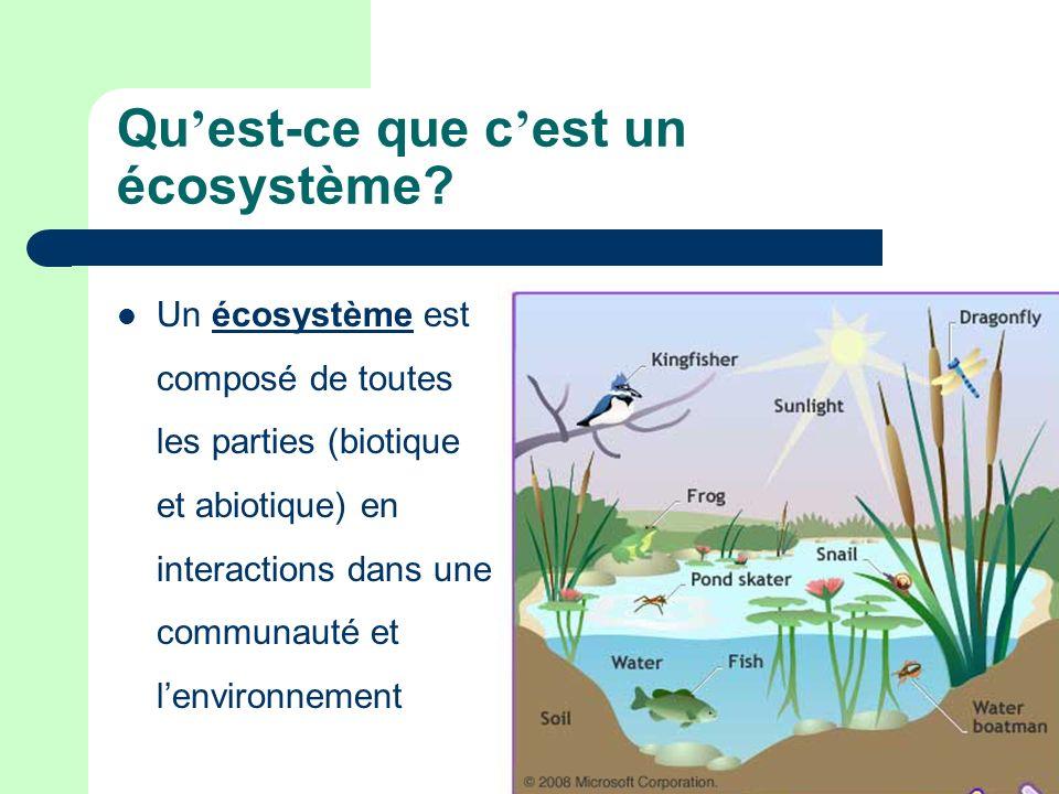 Qu'est-ce que c'est un écosystème