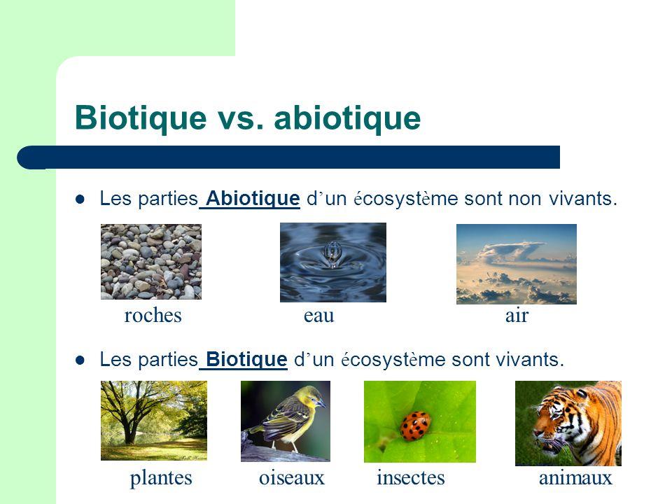 Biotique vs. abiotique roches eau air plantes oiseaux insectes animaux