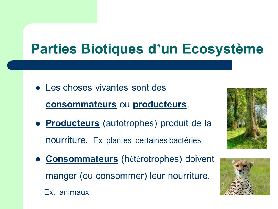 Parties Biotiques d'un Ecosystème