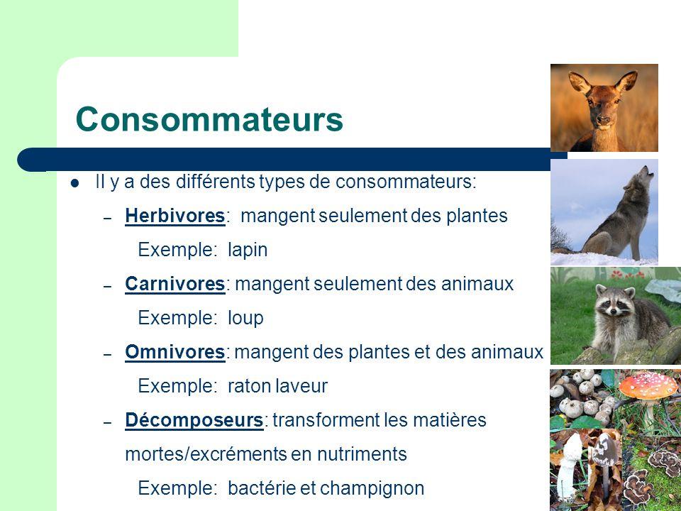 Consommateurs Il y a des différents types de consommateurs: