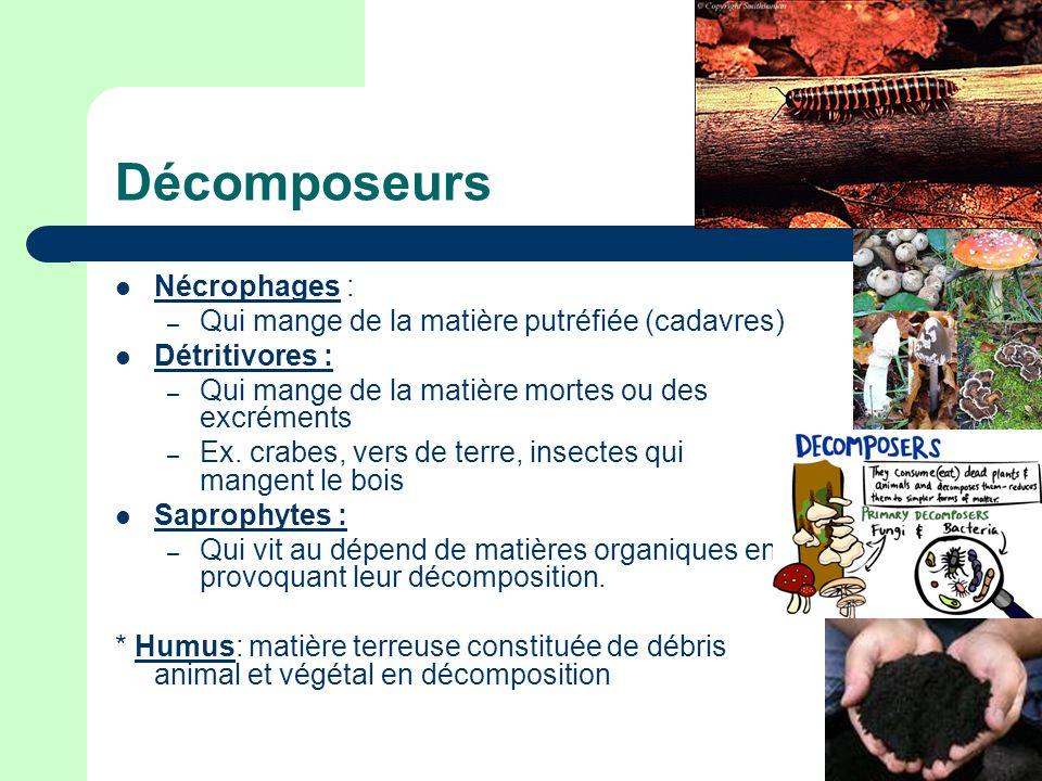 Décomposeurs Nécrophages :