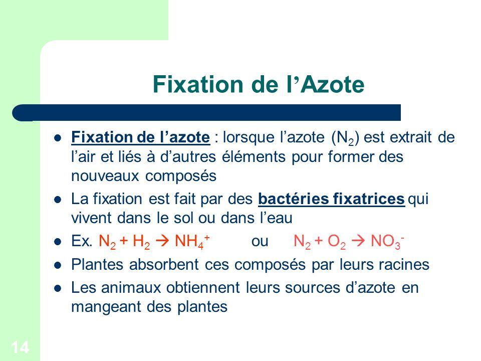 Fixation de l'Azote Fixation de l'azote : lorsque l'azote (N2) est extrait de l'air et liés à d'autres éléments pour former des nouveaux composés.