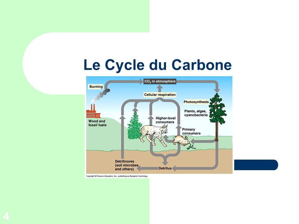 Le Cycle du Carbone Image from