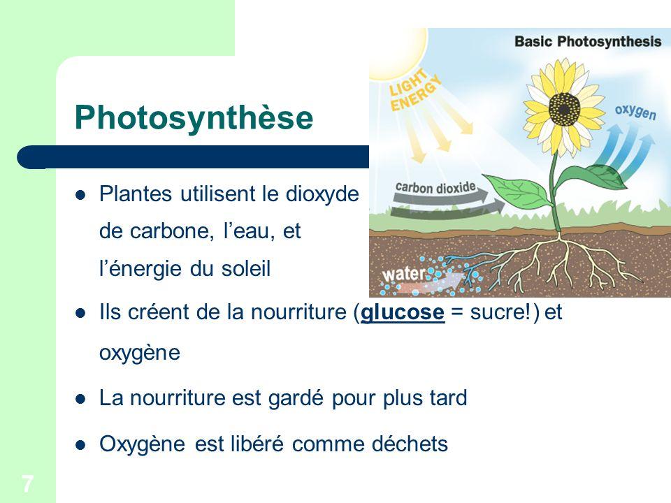 Photosynthèse Plantes utilisent le dioxyde de carbone, l'eau, et
