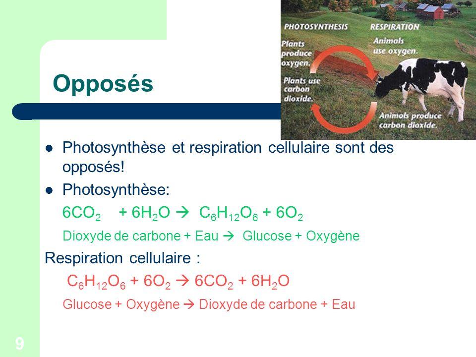 Opposés Photosynthèse et respiration cellulaire sont des opposés!