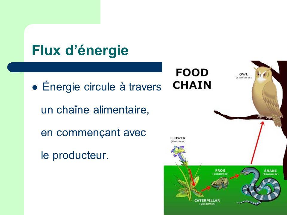 Flux d'énergie Énergie circule à travers un chaîne alimentaire,