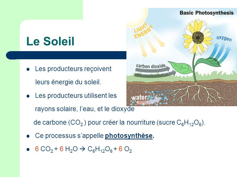 Le Soleil Les producteurs reçoivent leurs énergie du soleil.
