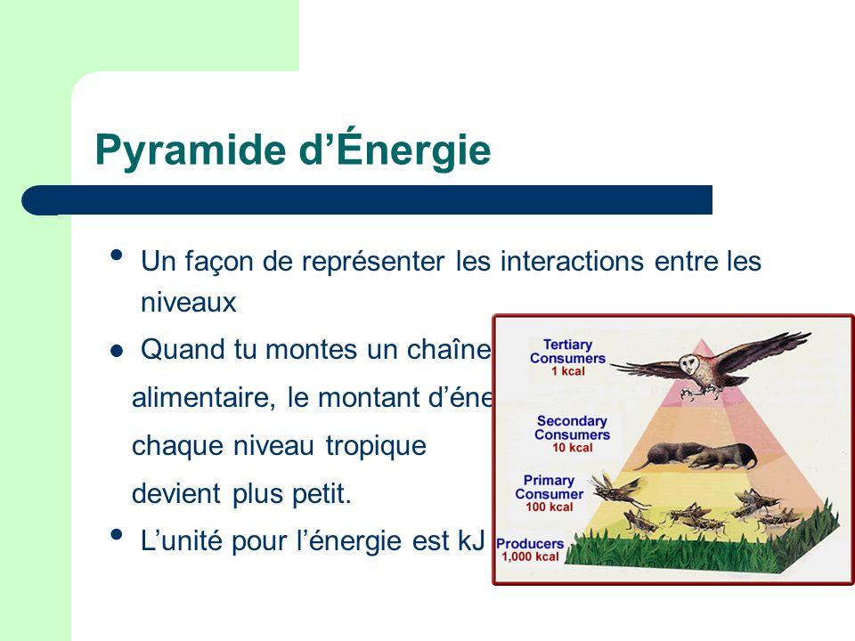 Pyramide d'Énergie Un façon de représenter les interactions entre les niveaux. Quand tu montes un chaîne.