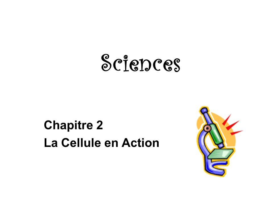Chapitre 2 La Cellule en Action