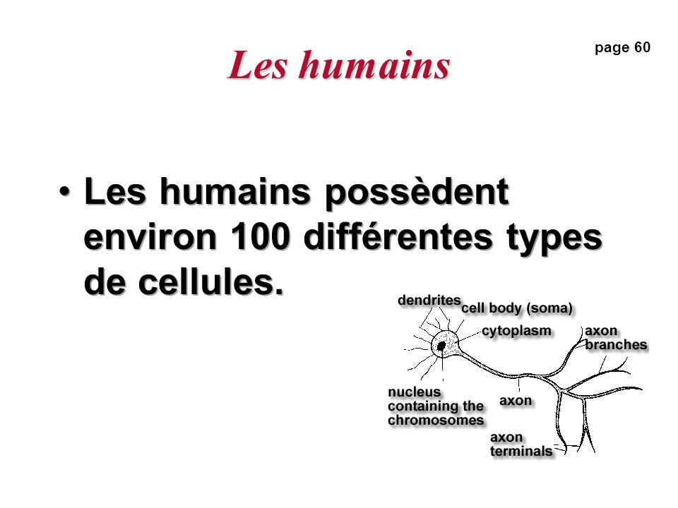 Les humains page 60 Les humains possèdent environ 100 différentes types de cellules.