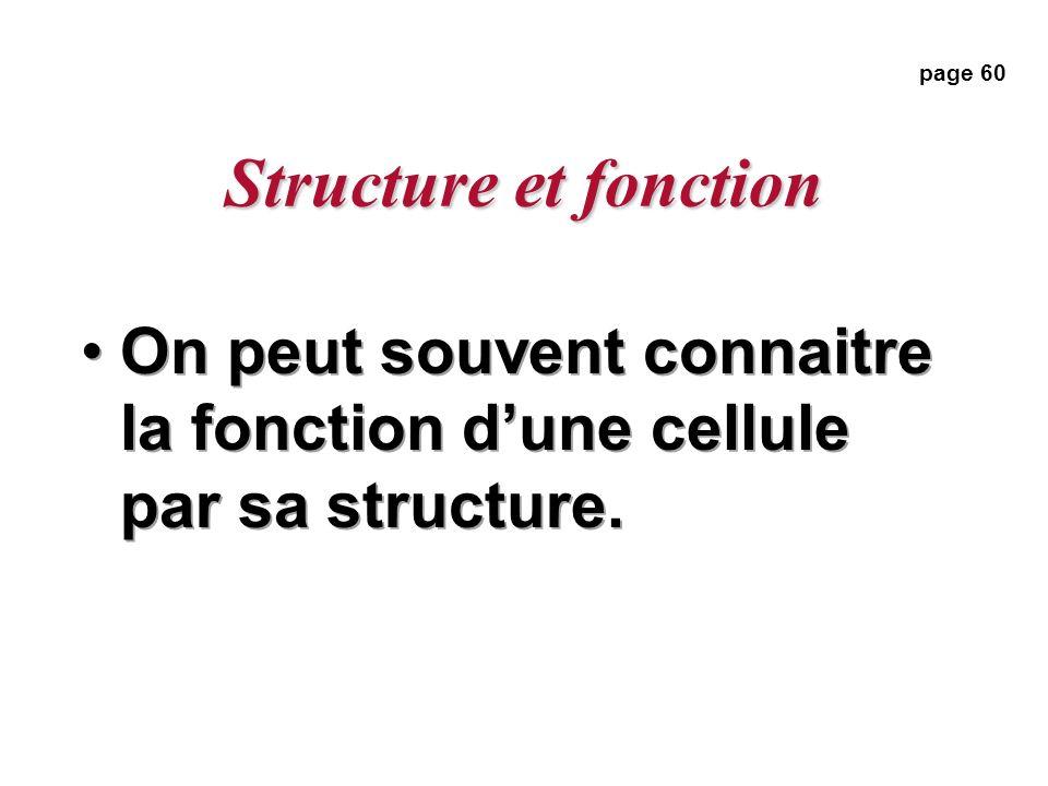 Structure et fonction page 60 On peut souvent connaitre la fonction d'une cellule par sa structure.