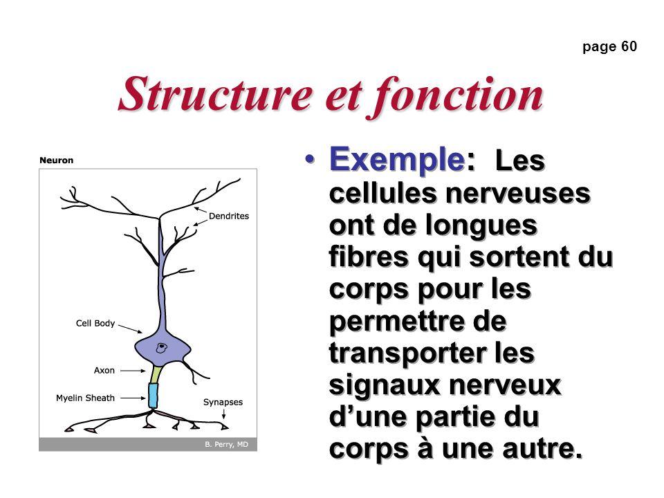 Structure et fonction page 60.