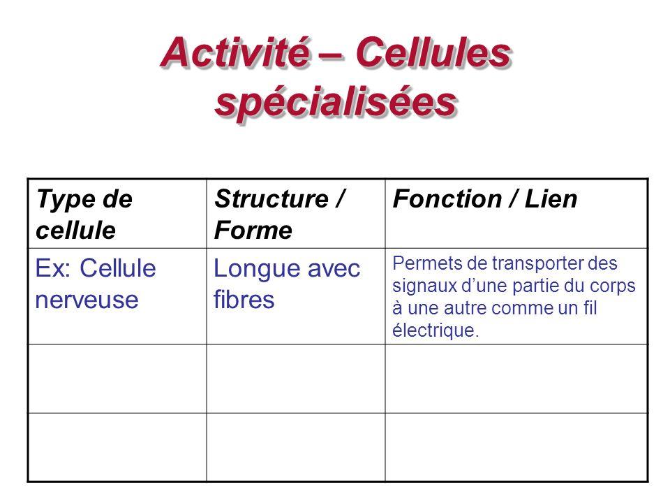 Activité – Cellules spécialisées