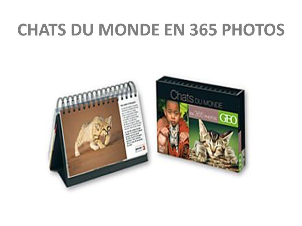 CHATS DU MONDE EN 365 PHOTOS
