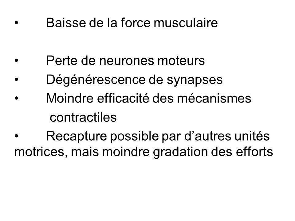 Baisse de la force musculaire Perte de neurones moteurs