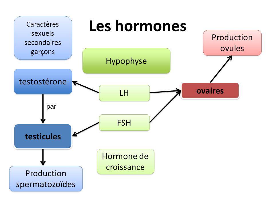 Les hormones Production ovules Hypophyse testostérone ovaires LH FSH