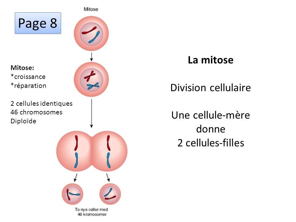 Page 8 La mitose Division cellulaire Une cellule-mère donne