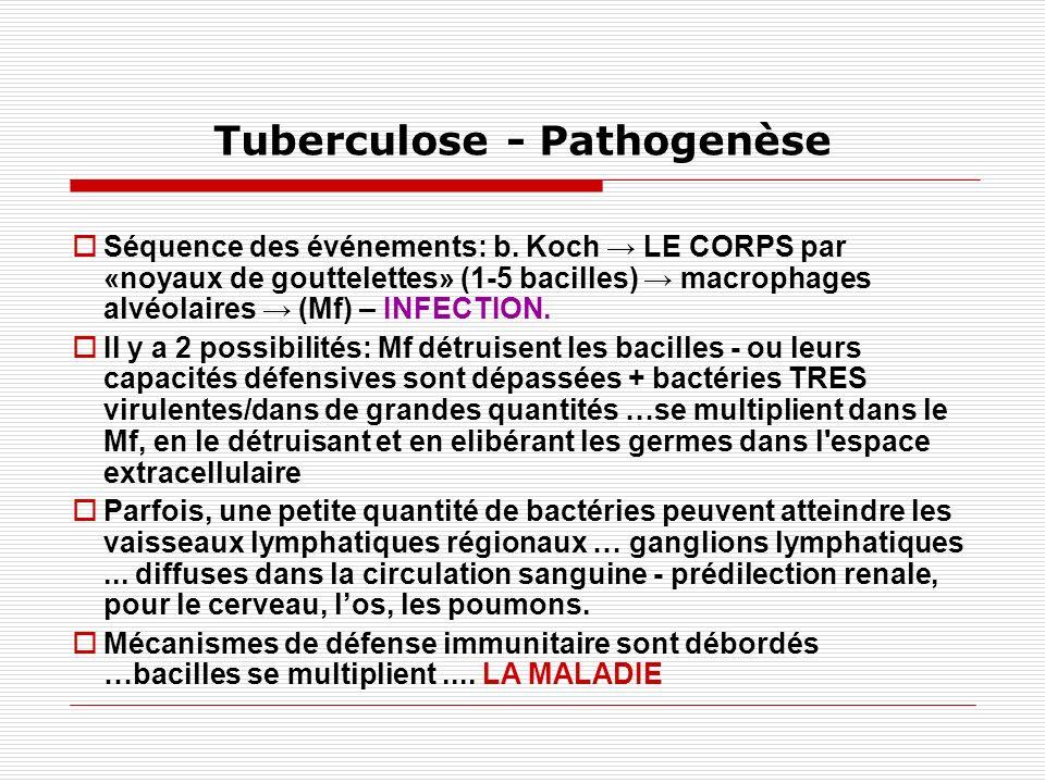 Tuberculose - Pathogenèse