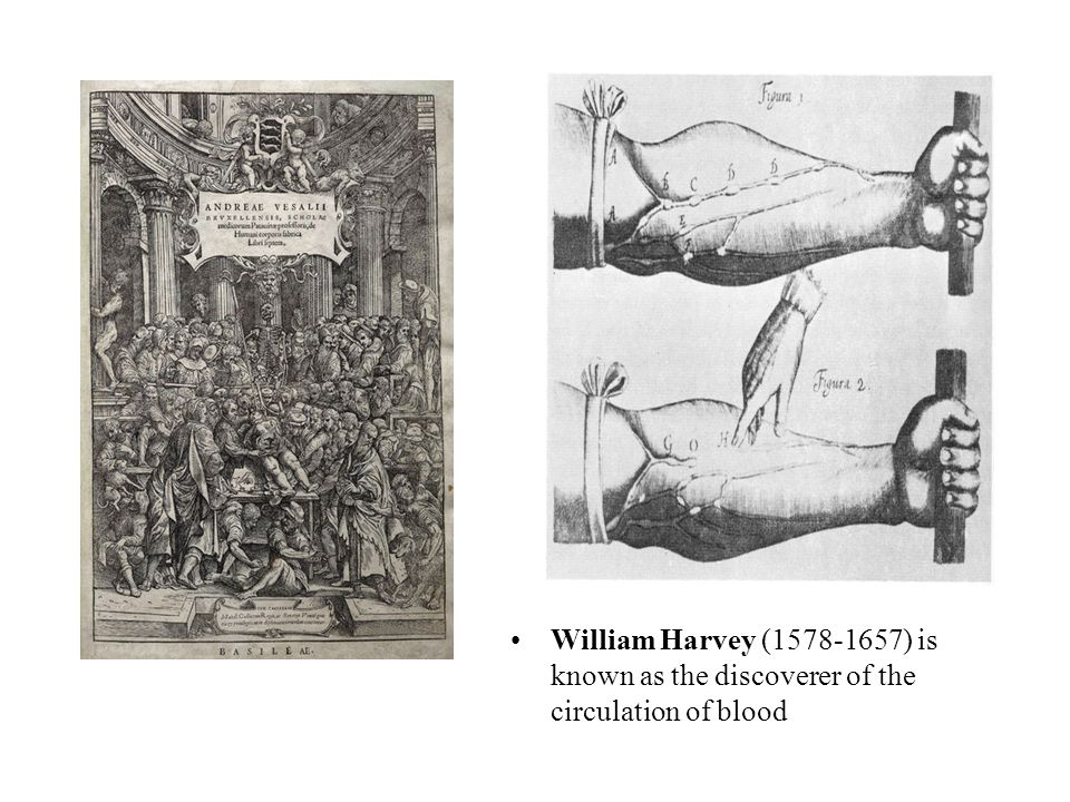 William Harvey (1578-1657) is known as the discoverer of the circulation of blood