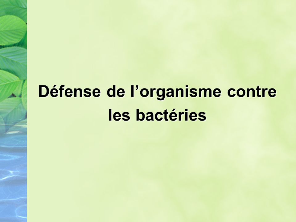 Défense de l'organisme contre les bactéries