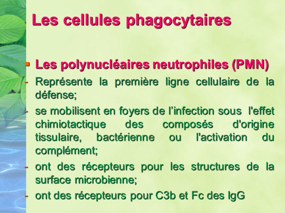 Les cellules phagocytaires