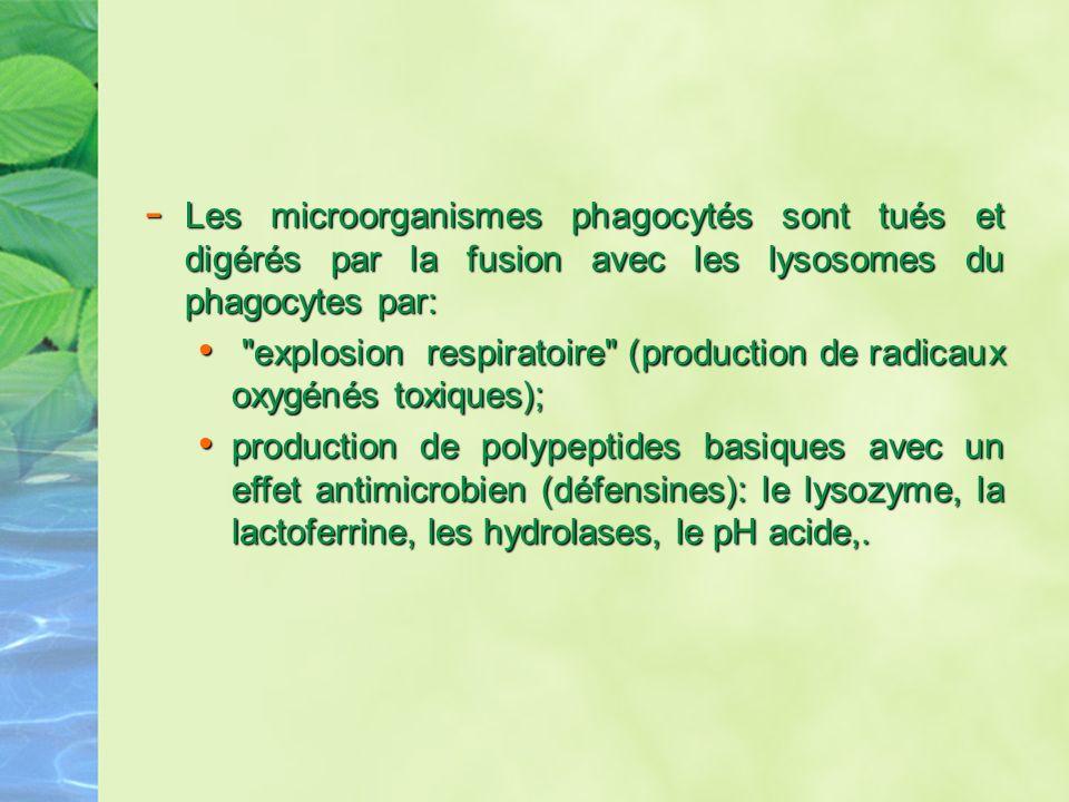 Les microorganismes phagocytés sont tués et digérés par la fusion avec les lysosomes du phagocytes par: