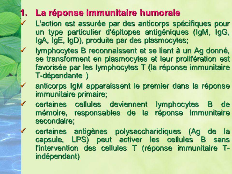La réponse immunitaire humorale