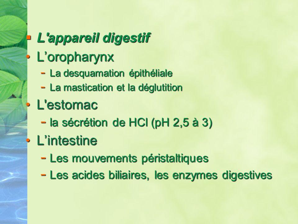 L appareil digestif L'oropharynx L estomac L'intestine