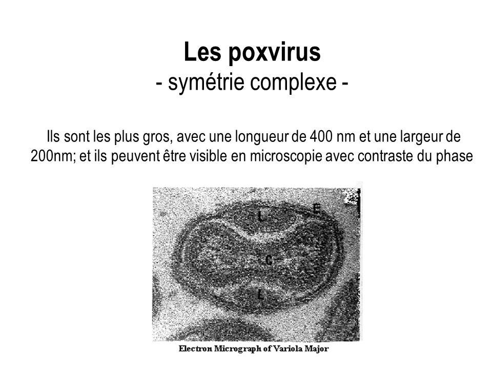 Les poxvirus - symétrie complexe - Ils sont les plus gros, avec une longueur de 400 nm et une largeur de 200nm; et ils peuvent être visible en microscopie avec contraste du phase