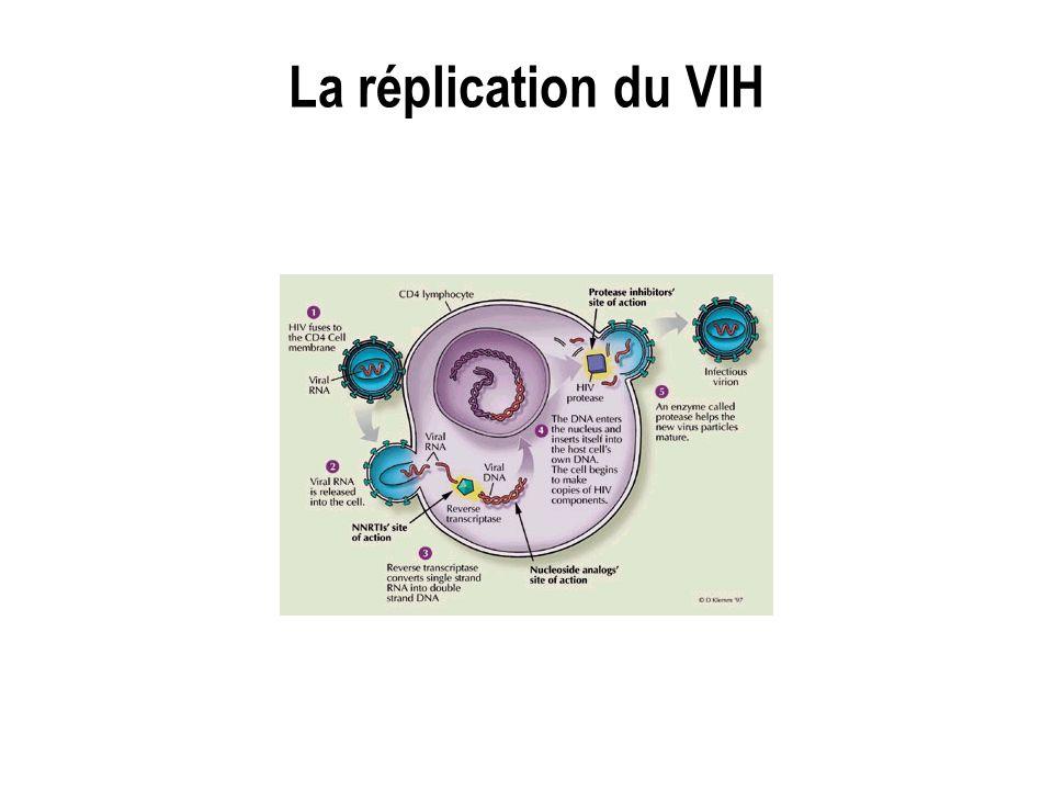La réplication du VIH