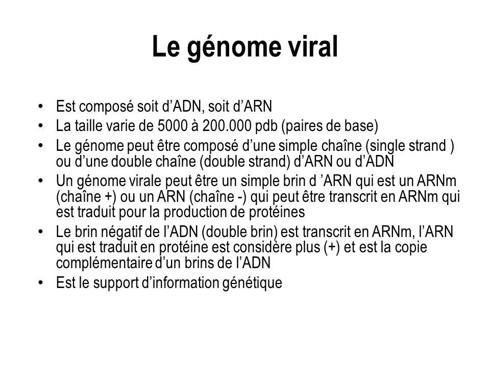 Le génome viral Est composé soit d'ADN, soit d'ARN
