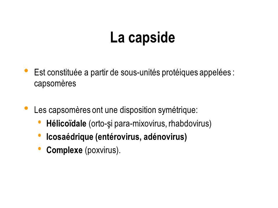 La capsideEst constituée a partir de sous-unités protéiques appelées : capsomères. Les capsomères ont une disposition symétrique: