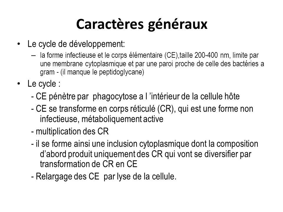 Caractères généraux Le cycle de développement: Le cycle :