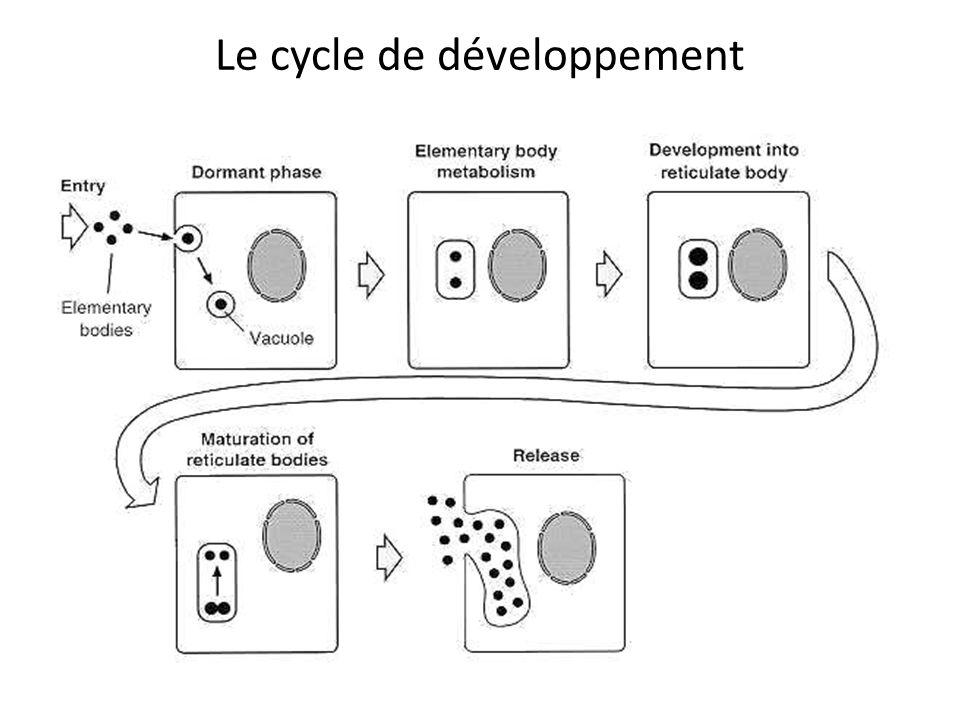 Le cycle de développement