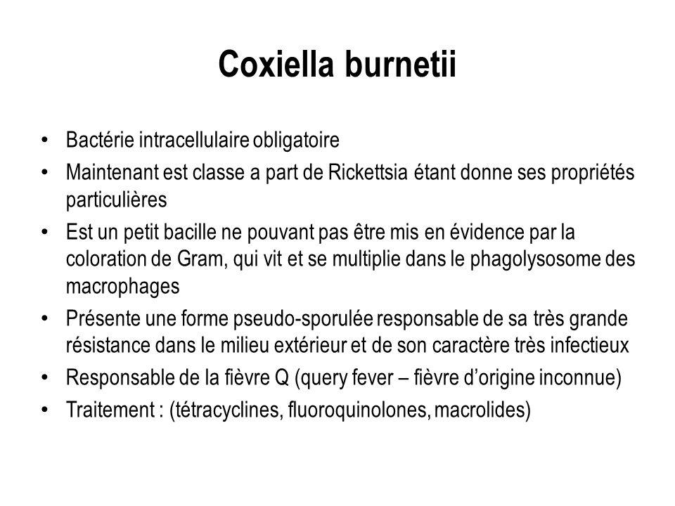 Coxiella burnetii Bactérie intracellulaire obligatoire