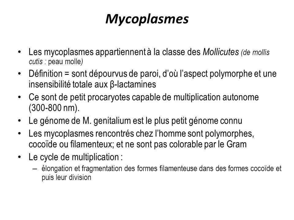 Mycoplasmes Les mycoplasmes appartiennent à la classe des Mollicutes (de mollis cutis : peau molle)