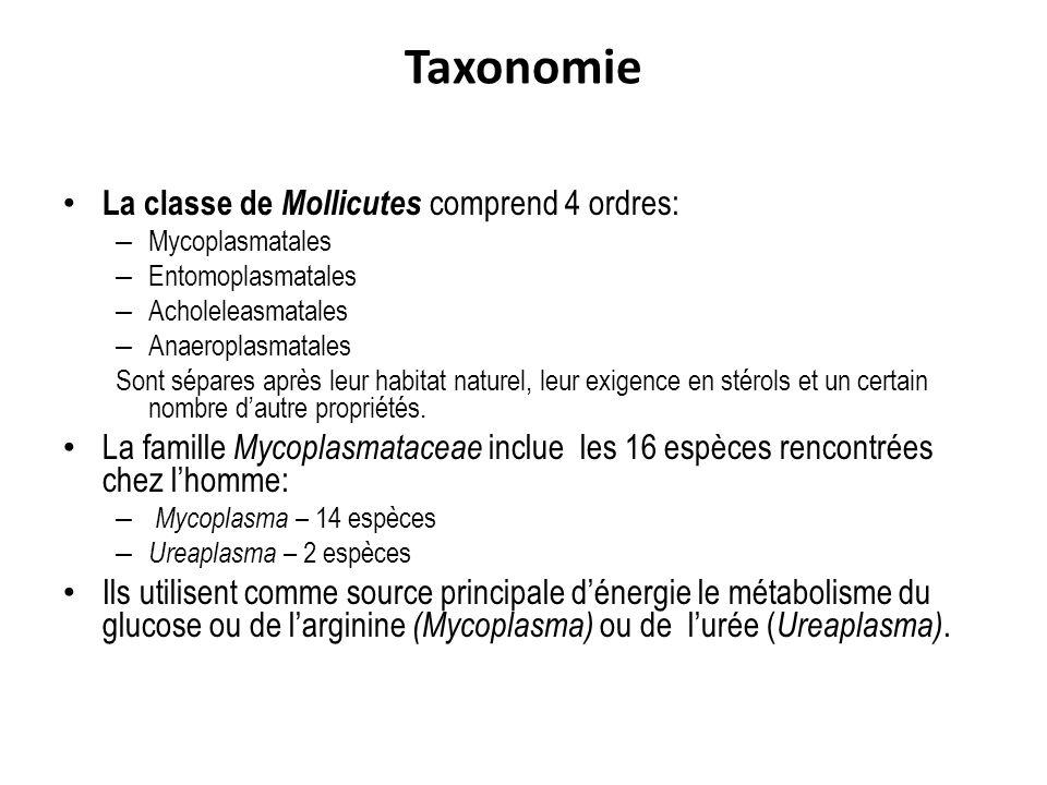 Taxonomie La classe de Mollicutes comprend 4 ordres: