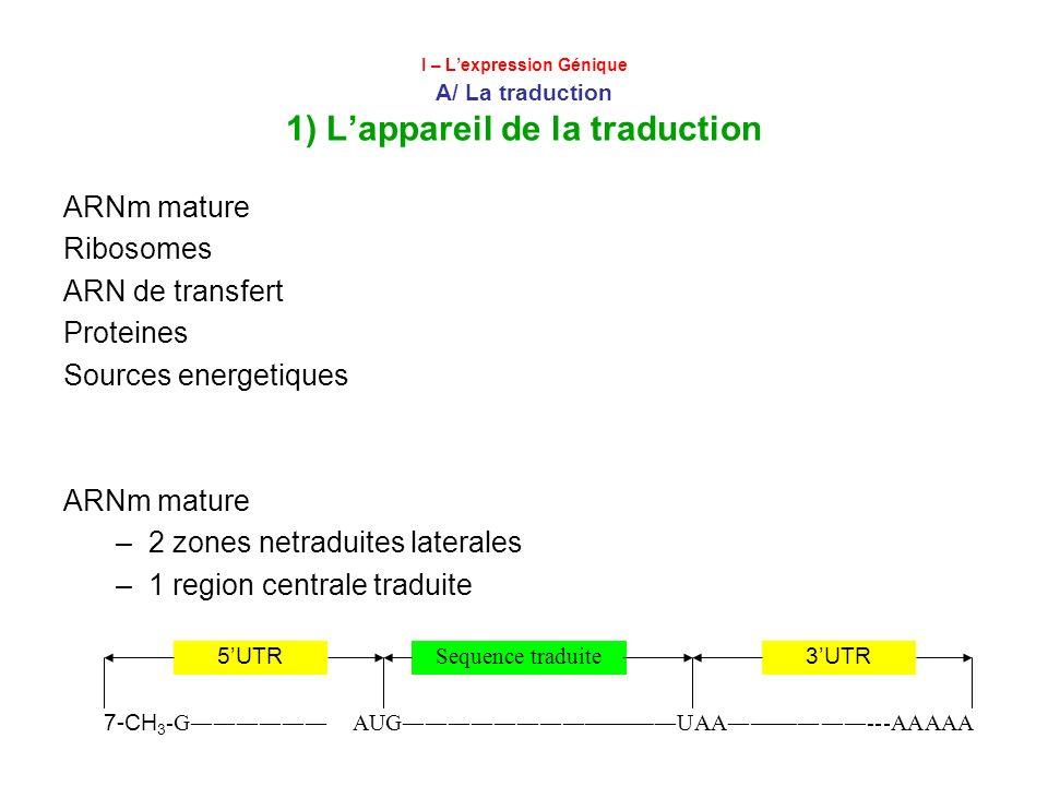 2 zones netraduites laterales 1 region centrale traduite