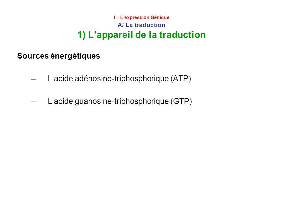 L'acide adénosine-triphosphorique (ATP)