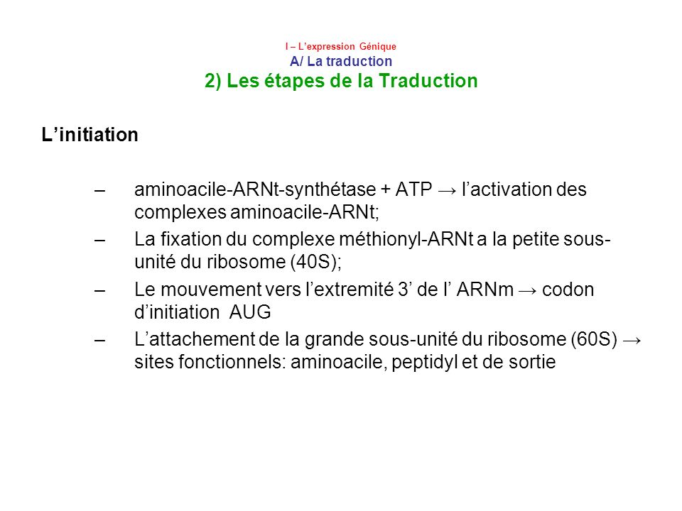 Le mouvement vers l'extremité 3' de l' ARNm → codon d'initiation AUG