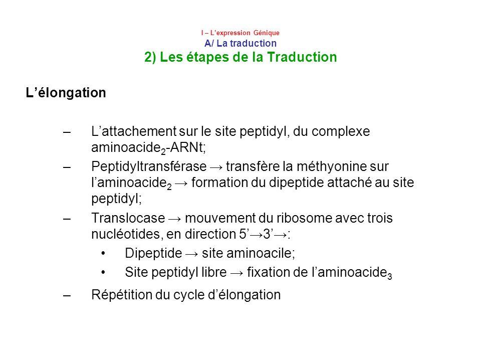 L'attachement sur le site peptidyl, du complexe aminoacide2-ARNt;