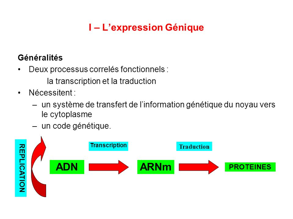 I – L'expression Génique