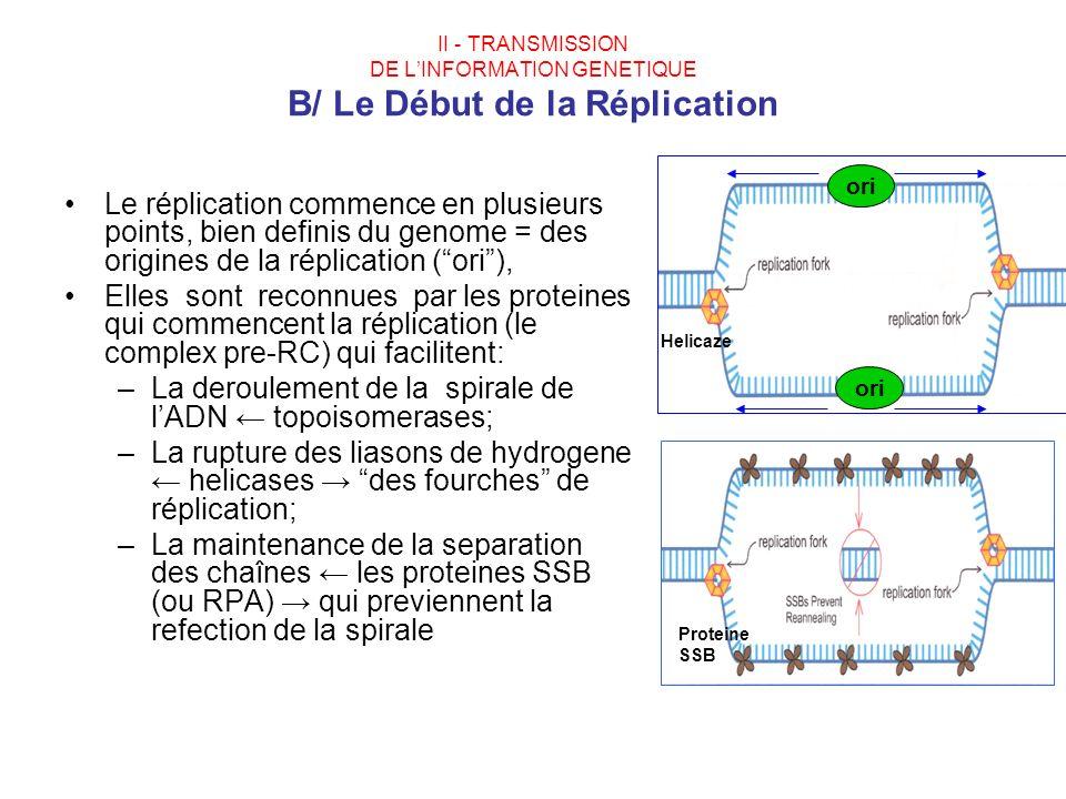 La deroulement de la spirale de l'ADN ← topoisomerases;
