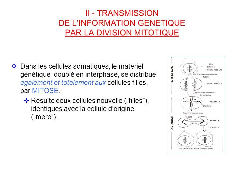 II - TRANSMISSION DE L'INFORMATION GENETIQUE PAR LA DIVISION MITOTIQUE