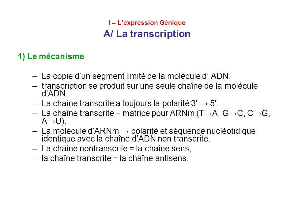I – L'expression Génique A/ La transcription